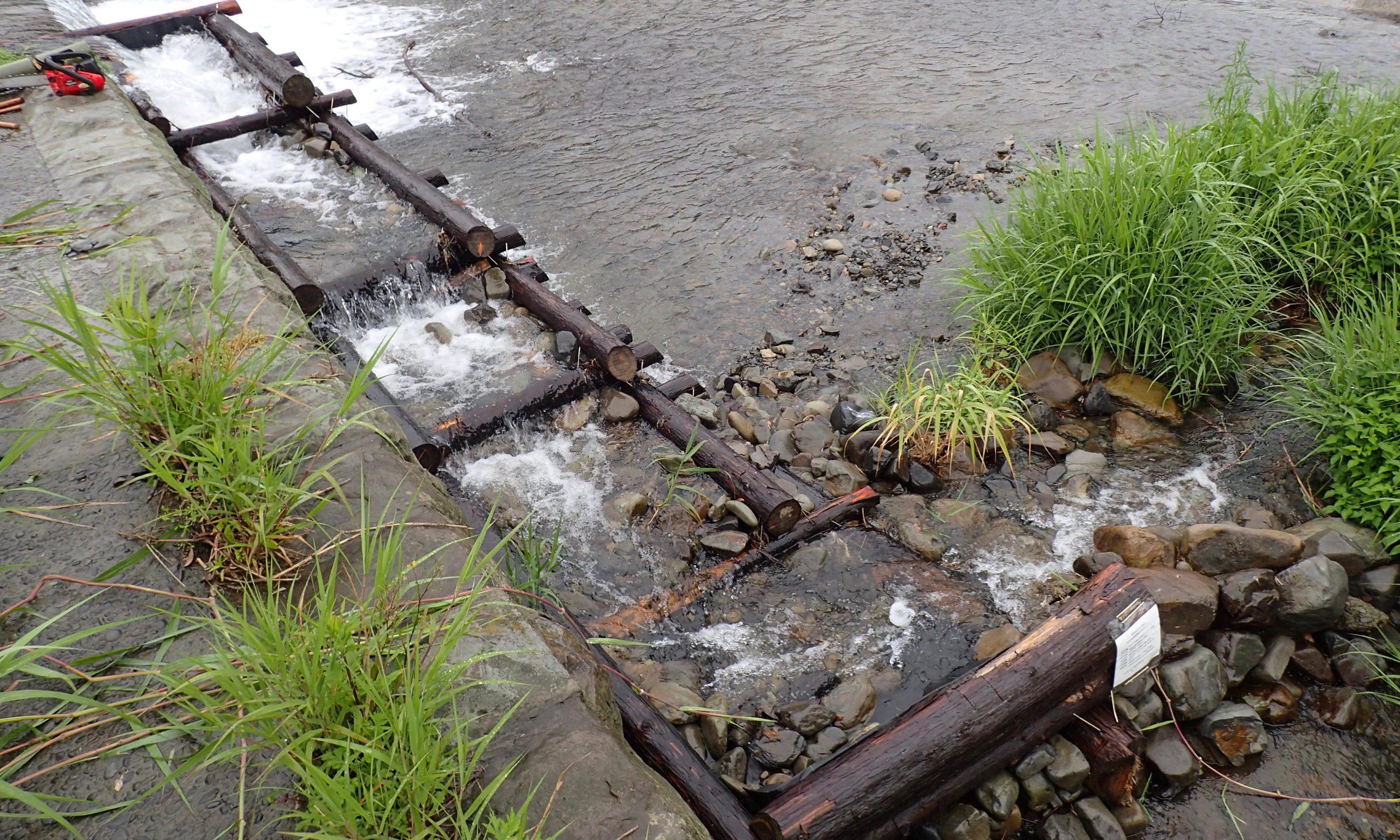 間伐材と土嚢で作った魚道